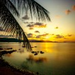 Palm leaves silhouette over sunset on Koh Samui. Thailand — Stock Photo #60707033