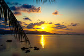 Palm leaves silhouette over sunset on Koh Samui. Thailand — Stock Photo