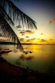 Palm leaves silhouette over sunset on Koh Samui. Thailand — Stockfoto
