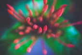 Unblown red flowers among the green leafs — Stock Photo