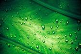 Regnet droppar på gröna blad. Makro shoot — Stockfoto