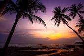 Palm tree silhouette on sunset tropical beach. Thailand — Stock Photo
