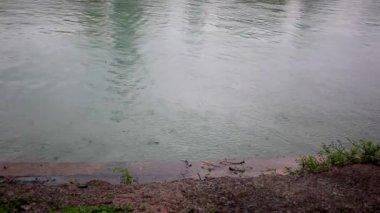 Rain drips into the pond. HD. 1920x1080 — Stock Video