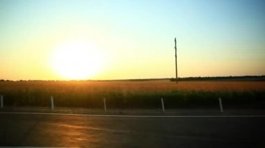 Sunny wheat field take from the car in sunset time. HD. 1920x1080 — Vídeo de stock