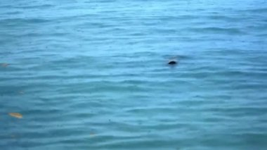 Rain drops falling on sea surface nice blue color. Video — Stock Video