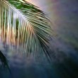 Night in tropics with palm tree and full moon. — Stock Video #65607857