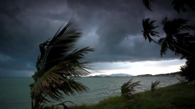 Rainy season on tropical region.  Ocean shore in waiting of typhoon at the evening, Palm tree windy. Video — Stock Video