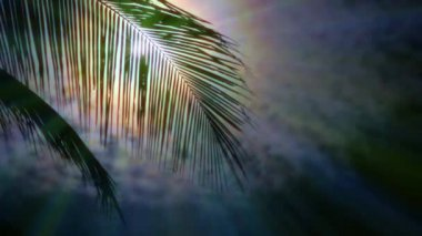 Night in tropics with palm tree and full moon. — Stock Video