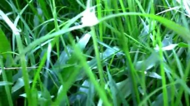 Grass under sunshine. Shift macro video — Stock Video
