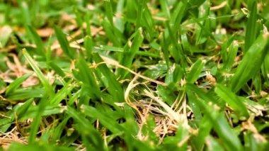 Green grass macro close up. Video shift motion — Stock Video