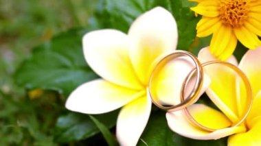 Close up wedding gold rings on the Thai flowers frangipani. Macro video shift motion — Stock Video