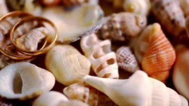 Close up golden wedding rings on shells. Macro video shift motion — Stock Video