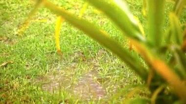 Puddle in a meadow after rain storm. Video shift motion — Stock Video