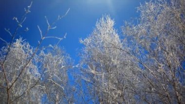 Snowy birch branches in winter sunny day against clear blue Winter sky. HD. 1920x1080 — Stock Video
