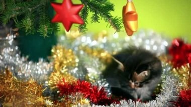 Maine coon kittens playing under  Christmas tree on green background — Stock Video