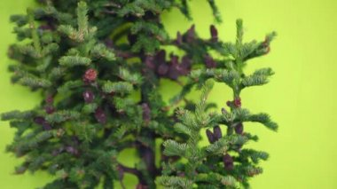 Christmas tree with cones without toys  on a green background. not decorated — Stock Video