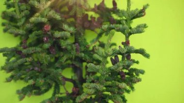 Christmas tree with cones and star without toys  on a green background. not decorated — Stock Video
