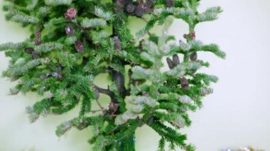 Christmas tree with cones on a white background. not decorated — Stock Video