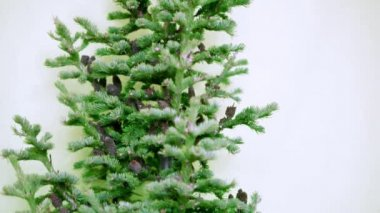 Christmas tree with cones and tinsel under tree on a white background. not decorated — Stock Video