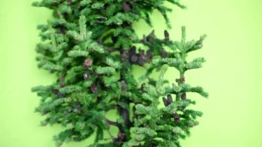 Christmas tree with cones on a green background. Not decorated — Stock Video