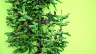 Christmas tree with cones and tinsel not decorated under tree on a green background — Stock Video