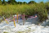 Protected Turtle Nest — Stock Photo