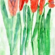 Child Drawing of Red Tulip Flowers, Watercolor — Stock Photo #57837995