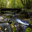 Stream in Fall at Smoky Mountain National Park — Stock Photo #81676902