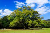 Alberi della foresta — Foto Stock