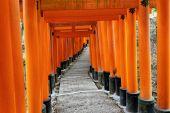 Fushimi Inari taisha tapınak Kyoto — Stok fotoğraf