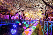 Cherry blossoms at night — Stock Photo