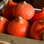 Hokkaido pumpkins — Stock Photo #63681681