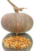 Heap seeds and pumpkin — Stock Photo