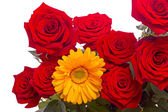 Red roses and yellow gerber close-up — Stock Photo