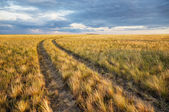 Turn of rural road in steppes — Stock Photo
