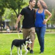 Happy couple in love walking in park with grass, with a husky dog — Stock Photo #71960453