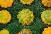 Yellow Pattypan Squashes — Stock Photo