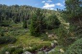 Landscape of Green hills in Pirin Mountain — Stock Photo