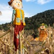 Scarecrows in a Corn Field — Stock Photo #56575409