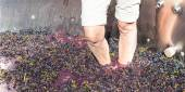 Old Fashioned Grape Stomping — Stock Photo