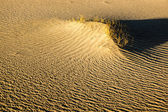 Sculpted Sands and Desert Brush — Stock Photo