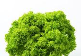 Lettuce Lollo Bionda — Stock Photo