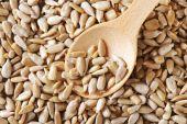 Raw sunflower seed — Stock Photo