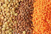 Lentil varieties — Stock Photo