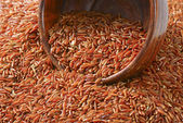 Camargue red rice — Stock Photo