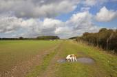 Pet dog in the yorkshire wolds — Stock Photo