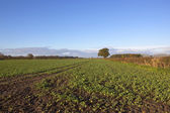 Autumn arable landscape — Stock Photo