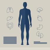 Vector Human Organs — Stock Vector