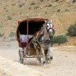 Tourist transport (carriage) in Petra,  Jordan-- it is a symbol of Jordan, as well as Jordan's most-visited tourist attraction — Stock Photo #66169443