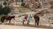 Bedouins horses in Petra,  Jordan-- it is a symbol of Jordan, as well as Jordan's most-visited tourist attraction — Stock Photo